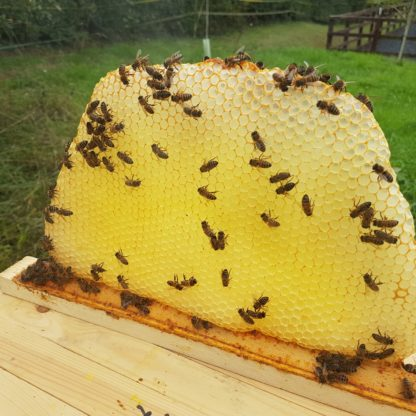 Horizontal Top Bar Hive